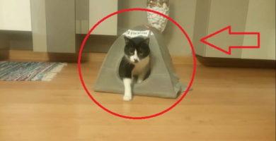 Tienda de campaña para gatos.